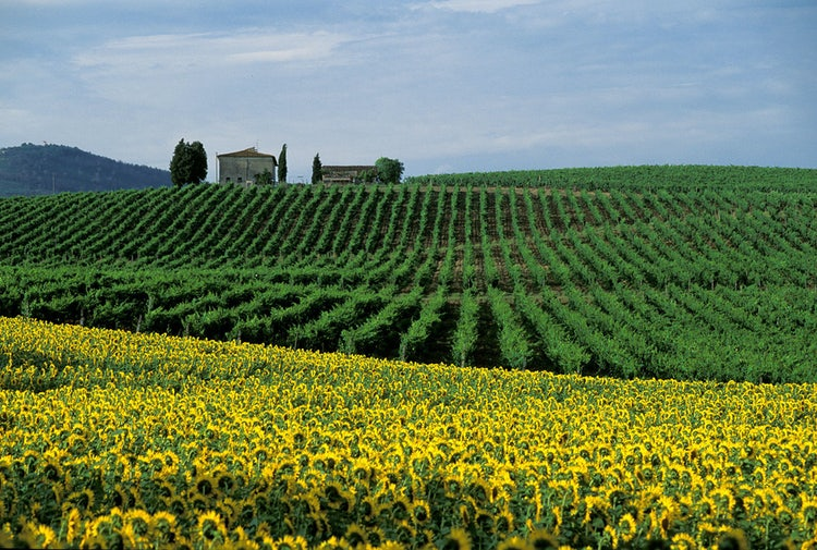 Enjoy great views in Chianti