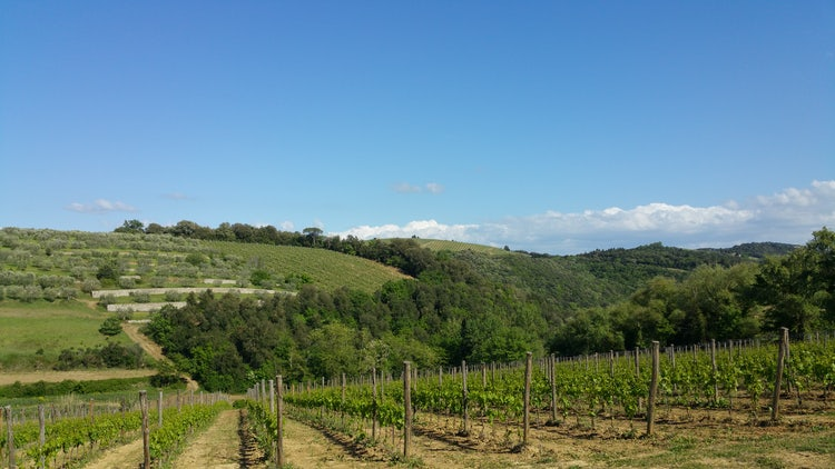 Biking and wine tasting in Chianti is the best way to enjoy the territory