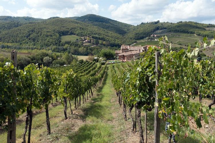 Organized wine tastings in Chianti