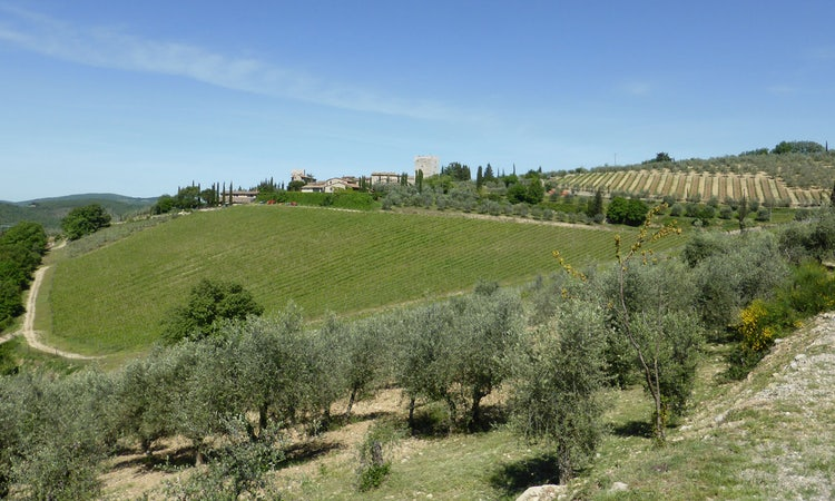 Vineyards in Gaiole in Chianti