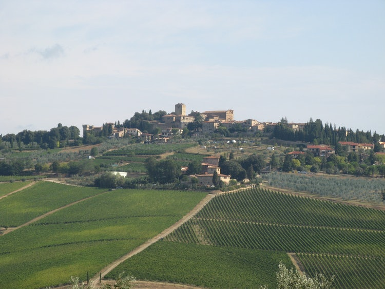 Vineyards & olive groves in Chianti