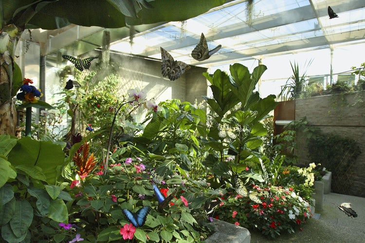 The butterfly house at the Pinocchio Park near Collodi and Pistoia