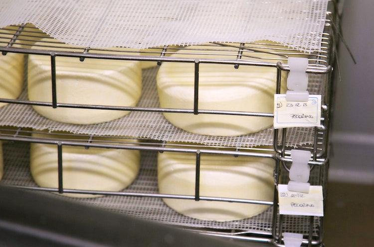 Pecorino cheese production in Tuscany