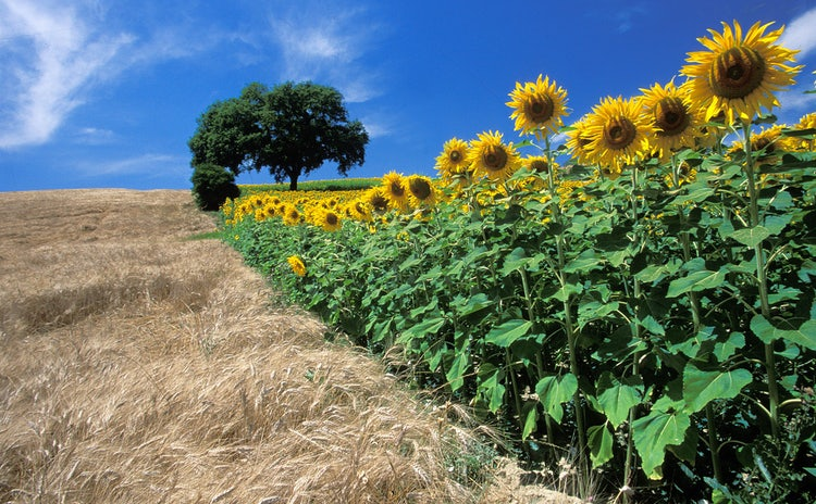 Fabulous Summer Tours to see Val d'Orcia