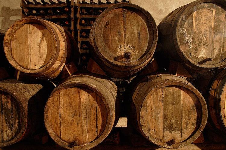Villa Sant Anna Vino Nobile vineyards in Montepulciano