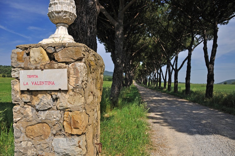 Valentina Nuova: Mediterranean garden near Tuscan beaches