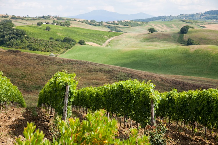 Tuscan vineyards and your wine collection
